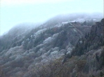 A Dreary Day on Grandfather Mountain